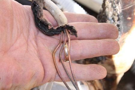Photo: Sharp Contrast between undamaged and damaged wire insulation